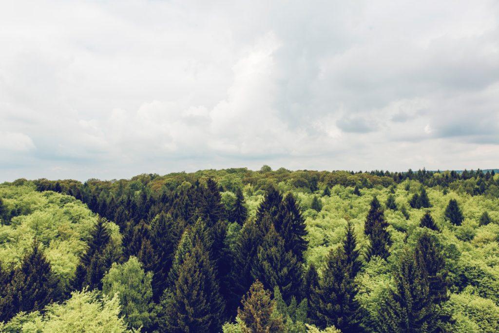 Ausblick vom Baumwipfelpfad in Ebrach auf einen großen Fichtenwald