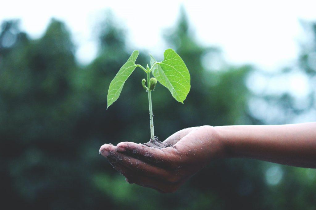 Eine Kinderhand hält einen Pflanzensetzling mit Erde in der Hand